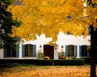 great-yellow-tree-against-white-house-on-waiola-1-1