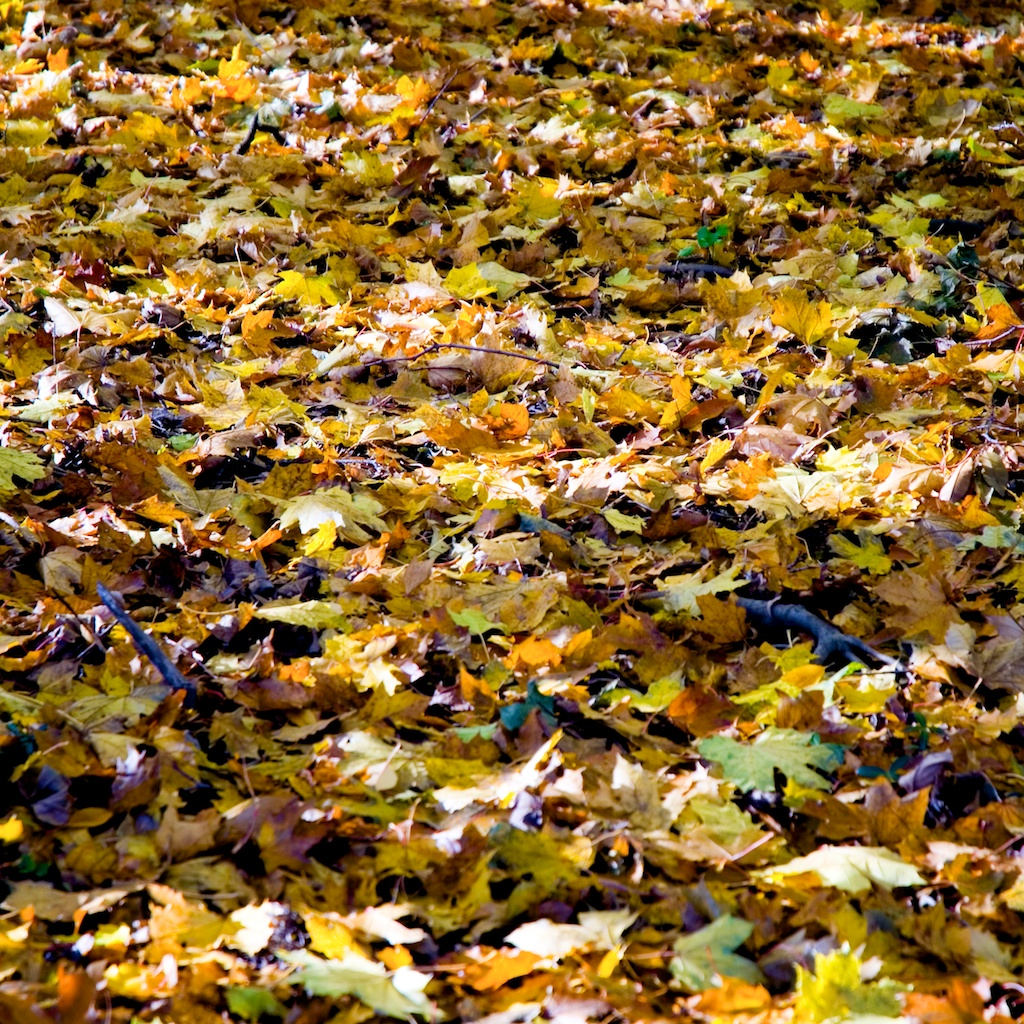 essay autumn leaves Essay the autumn and the fall of leaves it is not true that the close of a life which ends in a natural fashion- --life which is permitted to put on the.