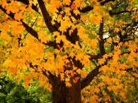 graw-mill-orange-tree1